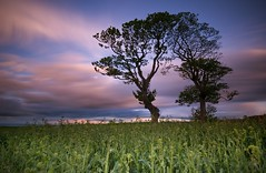 Kissing Trees (Mike Cumming) Tags: longexposure trees field scotland fife pinkclouds kinghorn d300 leefilters bigstopper