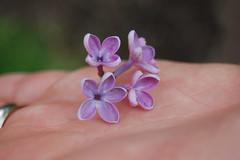 Five petal lilac