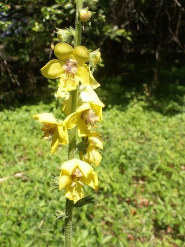 100502-yellowflowers3-ok