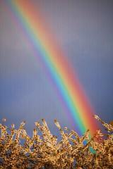 Rainbow (ihughes22) Tags: nature rainbow liverpoolecho beautifulshot superphotographer nikondigitalmagic nikond40 liverpooldailypost vftw theperfectphotographer picturesworthathousandwords artofimages addictedtonature worldmasterpieceaward bestcapturesaoi liverpoolphotographers nikond40shootersalley knowsleymerseyside mygearandme ihughes22 flickrshutterspace