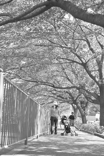 町田樹 画像26