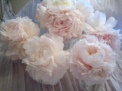 Peonies ~ 2010 (skblanks) Tags: pink white ruffles crystal lace peony shakers