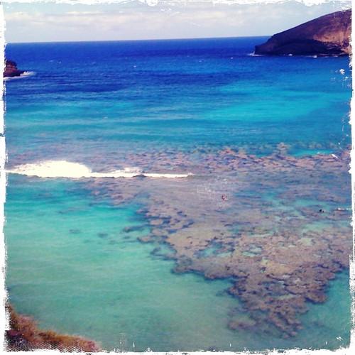 snorkling reef