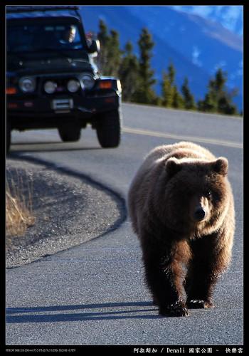 阿拉斯加被不餓的熊追2