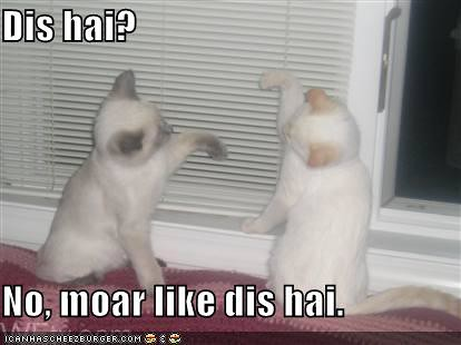funny-pictures-kittens-argue-about-the-height-of-something