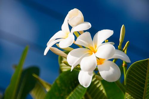 Bora Bora 07