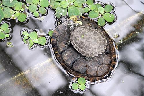 cute-turtle