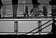 Silhouettes & shadows (Just a guy who likes to take pictures) Tags: voyage street travel shadow portrait people bw en sun white man black holland male public netherlands monochrome dutch station silhouette stairs train photography und spring reisen europa europe shadows legs ns candid transport nederland thenetherlands rail railway bahnhof treppe human transit infrastructure estacion commuter holanda commuting mister nl railing mass herr schaduw sonne zwart wit weiss zon trap schwarz castricum communters trein niederlande hek benen zw reizen ov the vervoer schaduwen meneer openbaar public transport
