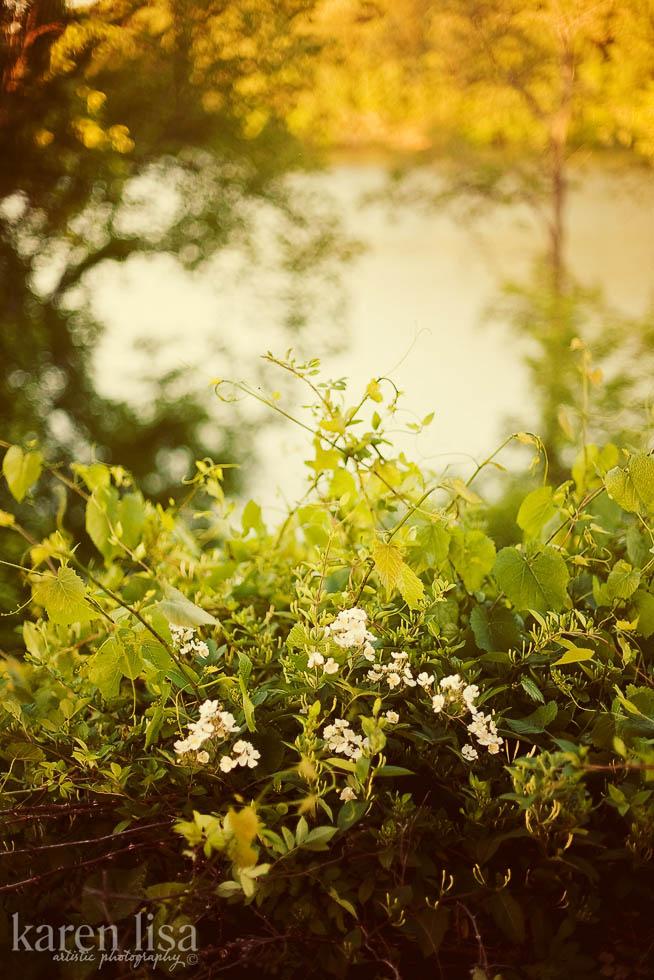 Interesting Flowers in TN