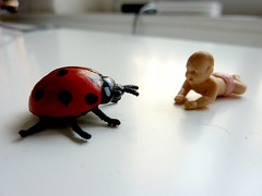 tower of teeny (hellabella) Tags: new pink baby david cute bug real small nappy diaper tiny ladybird goliath crawl allcreaturesgreatandsmall