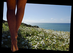 Piernas, flores y el mar (precognos) Tags: flowers woman flores see mar legs margaritas piernas