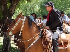 Bien enpilchao (Eduardo Amorim) Tags: horses horse southamerica argentina criollo caballo cheval caballos cavalos pferde poncho cavalli cavallo cavalo gauchos pferd bit pampa riendas pala apero chevaux gaucho bridle 馬 américadosul platería bozal gaúcho cabezada amériquedusud provinciadebuenosaires reins лошадь recado gaúchos 马 sudamérica sanantoniodeareco suramérica américadelsur areco südamerika crioulo caballoscriollos criollos حصان pilchas pretal coscoja cabeçada pilchasgauchas recao pampaargentina americadelsud plateríacriolla breastcollar crioulos cavalocrioulo americameridionale caballocriollo peiteira rédeas eduardoamorim cavaloscrioulos buçal coscós iayayam yamaiay pampaargentino