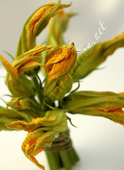 Flowers - Zucchini Blossoms Bouquet [02]