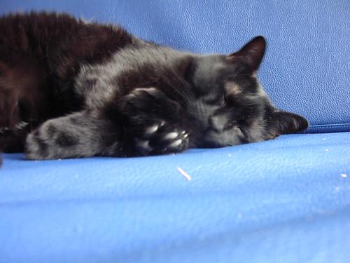 Oneida sleepy