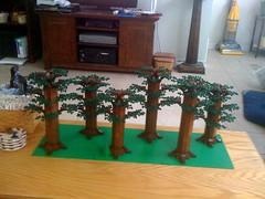 6 Endor Trees