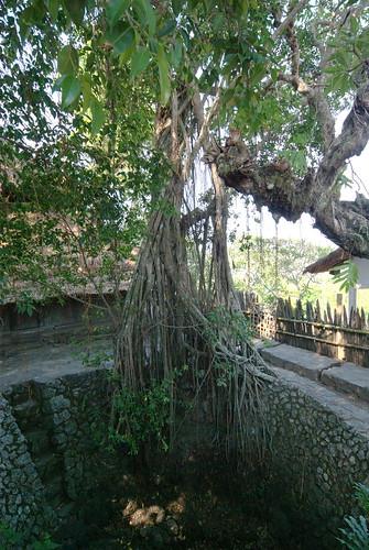 1069 - J15 - Lombok - Village de Rambitan - _IGP2558