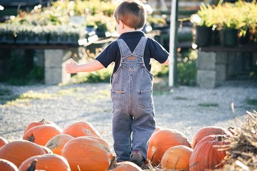 pumpkins-1-3