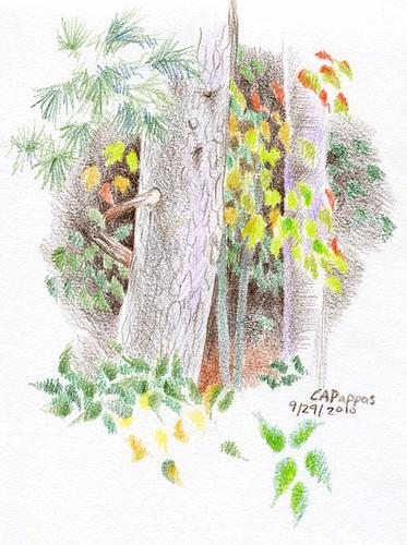 9-24-10, trees