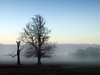 Stumped (Mr Grimesdale) Tags: park mist tree fog olympus e510 stevewallace croxtethpark mrgrimesdale stevewallaceportfolio