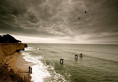 birds eye view (Andy Kennelly) Tags: ocean california old trees cliff storm eye rain birds clouds 1 pier sand highway day waves moody looking view pacific decay flight down davenport
