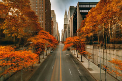 Fall in New York City (mudpig) Tags: nyc autumn red ny newyork tree fall yellow geotagged gold leaf manhattan gothamist chryslerbuilding eastside hdr 42ndstreet tudorcity mudpig stevekelley