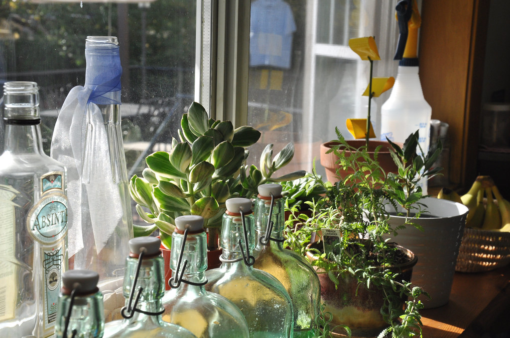 bottles & plants