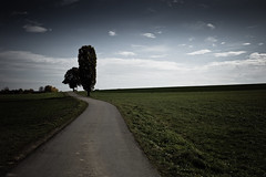 by my side (gato-gato-gato) Tags: road street leica tree nature rural germany landscape deutschland flickr strasse natur rangefinder landschaft baum spaziergang m9 naturephotography badenwrttemberg lndlich outdoorphotography dunningen badenwrttemberg gatogatogato leicasummiluxm50mmf14asph leicam9 gatogatogatoch wwwgatogatogatoch stampfe