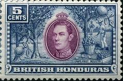 Grapefruit5c (anthony.s) Tags: stamps stamp engraved litho britishhonduras