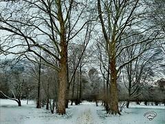 SNOW PATH #snow #path #Weg #Park #Kurpark #landscape #Landschaft #Photographie #photography (benicturesblackwhite) Tags: landscape weg landschaft park path photography kurpark snow photographie