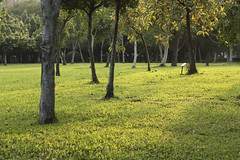 Park_Trees_n_Grass (judywangthang) Tags: park trees afternoonsun greengrass