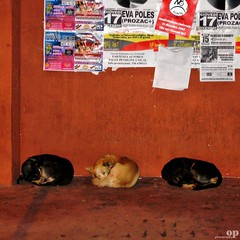 Have a Good Sleep... (Osvaldo_Zoom) Tags: italy pets cold dogs puppy three puppies university calabria academic noponte arcavacata httpwwwflickrcomgroupsveterinarifotografi
