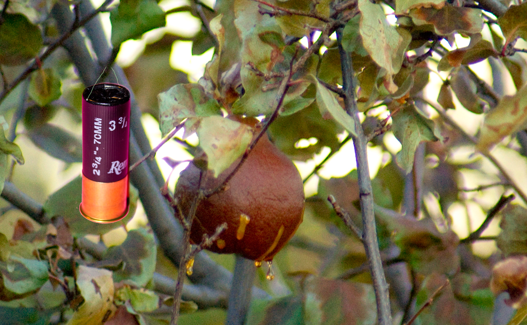 Pear Tree Cartoon Cartridge in a Pear Tree