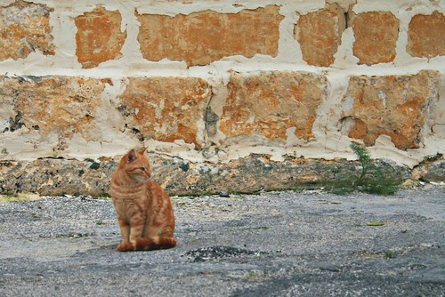 Red cat and wall