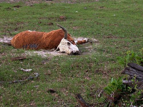 BONELUST - Dead Cow 5