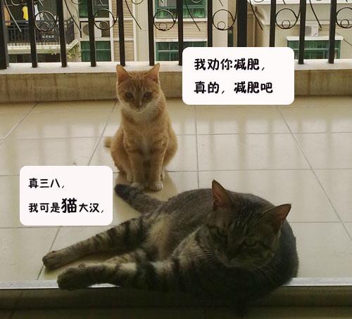 猫小姐与猫大汉