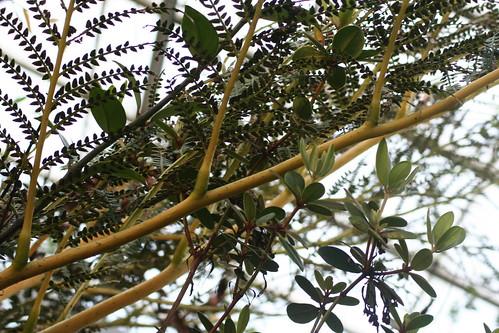 20090919 Edinburgh 20 Royal Botanic Garden 350