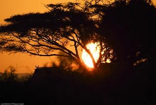 Sunrise - Amboseli national park - Kenya