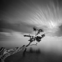 Water Tree 3 (Moises Levy L) Tags: longexposure arbol atardecer agua florida cloudscapes zeiss21mm absoluteblackandwhite alemdagqualityonlyclub obramaestra longexposure2minutes canon5dmll