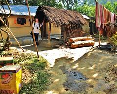 Lowacherra National Park, Srimongal (shaun shooter) Tags: park national lime bangladesh srimongal lowacherra