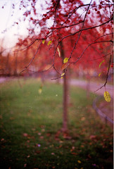 indian summer (Frau Koriander) Tags: herbst autumn 2009 analog nikonfg20 5512 bäume herbstbäume bokeh dof bremen bremenneustadt neustadtsanlagen 35mm