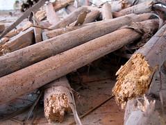Dit hout is echt overleden