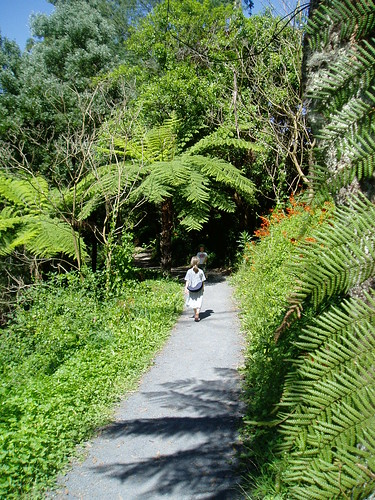 Warburton river walk