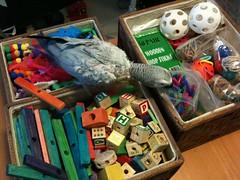 bird toys parrot africangrey