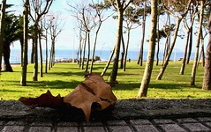 26 Arboleda de Samil ( Vigo - Galicia - Spain ) (Cesar Redondo) Tags: city autumn trees espaa paisajes naturaleza color colour leave beach nature leaves gardens automne canon garden landscape town spain arboles village herbst cities jardin ciudad playa paisaje villages colores ciudades galicia otoo  jardines pontevedra outono vigo feb10 february10 samil feb02 february02 hojasdeotoo autonno febrero10 samilvigo canon1000d arboledadesamilplaya playadesamilvigo febrero02