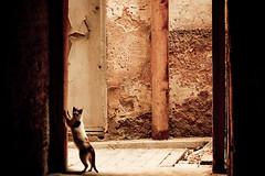 Cat (smashred) Tags: travel morocco marrakech chefchaouen essaouira tangier fes ashleynorris jeredgruber