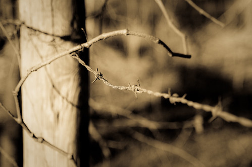 Barbed Wire and Vines (antiqued)
