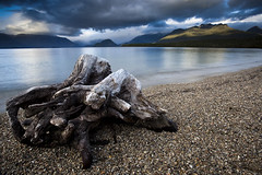Waiting for the Storm (fotoscape2009) Tags: newzealand lake reflection beach water clouds sunrise stump 5dmkii