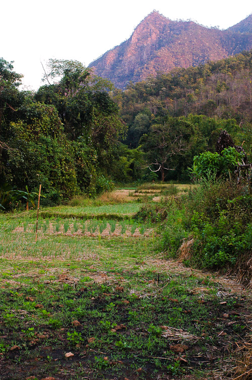 A plot of land outside of Mae Hong Son city up for sale