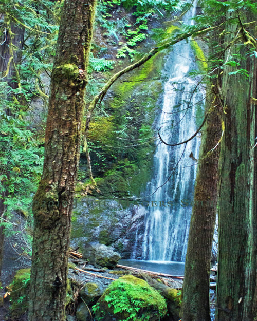 A photo of Marymere Falls seen between the trees on the last bit of the waterfall trail in Olympic National Park.
