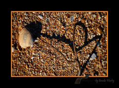 Cupids Shadow (Brooke Worley) Tags: shadow abstract love beach nature outside design sand heart earth shell style elements tones anawesomeshot